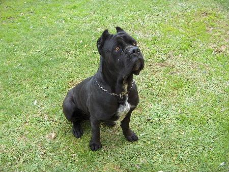 Tecniche di addestramento for Tequila e bonetti cane razza
