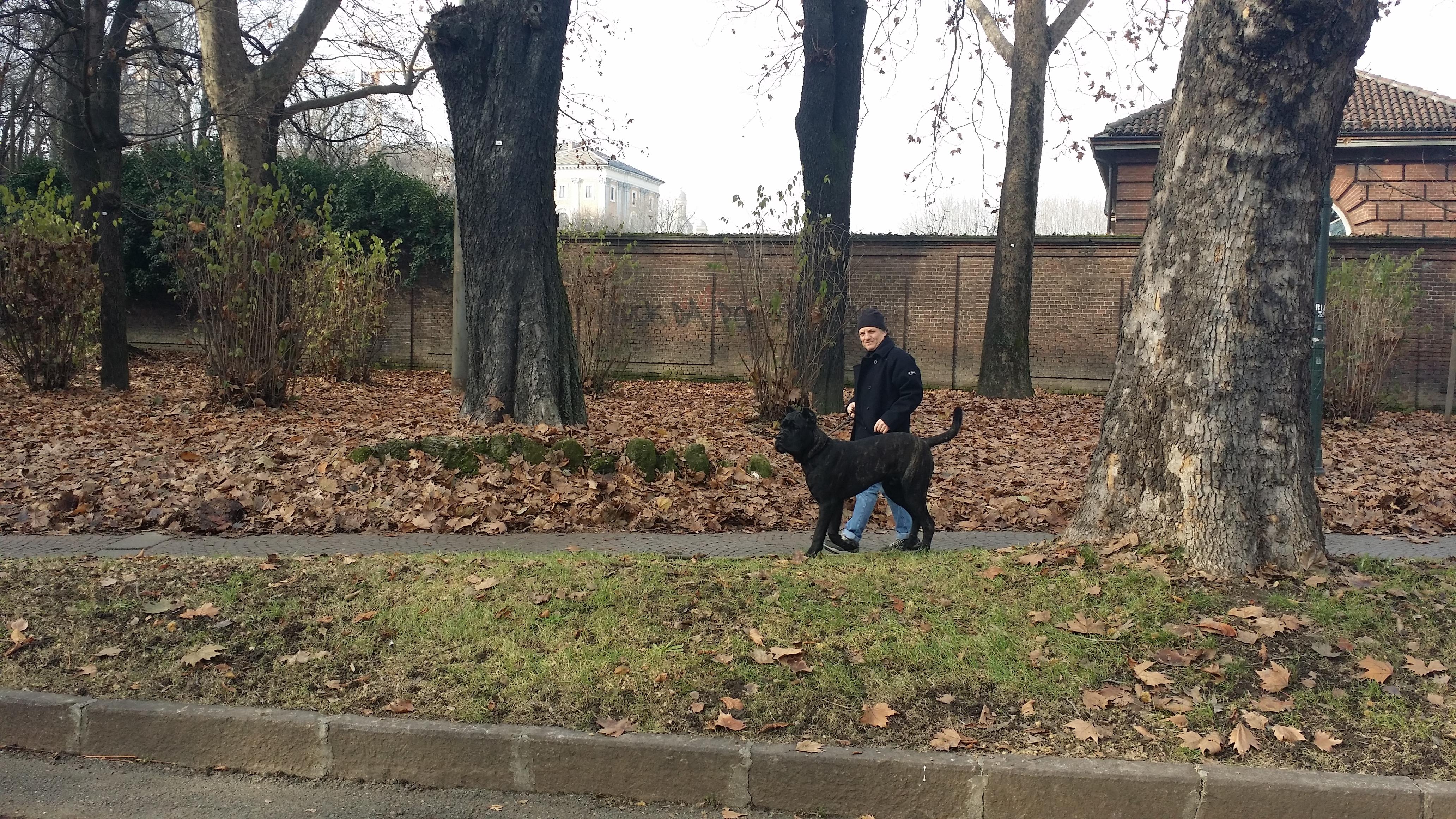 Cani Da Difesa E Da Guardia Cane Corso Blog