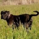 Profile photo of MPellicciotta