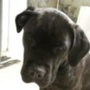 Foto del profilo di dario